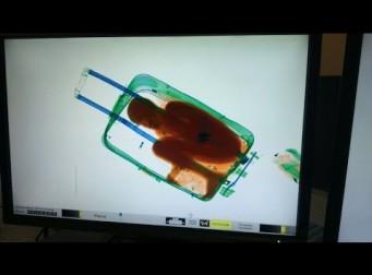 가방에 아이를 숨기고 입국 심사(동영상)