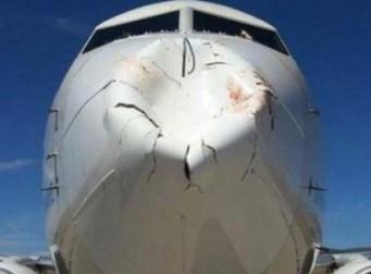새와 정면충돌한 보잉 여객기