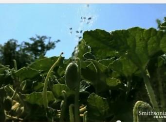 씨앗을 폭발하는 식물들(동영상)