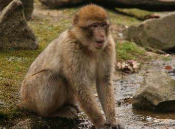 """""""원숭이들에게 집단 성추행을 당했어요!"""""""