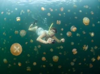 해파리 천지 물속에서 수영하는 남자(동영상)