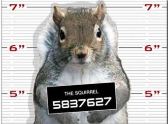 """美 경찰, """"땅콩을 훔쳐간 다람쥐를 공개수배합니다."""""""