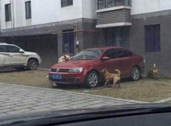 개들의 통쾌한 복수