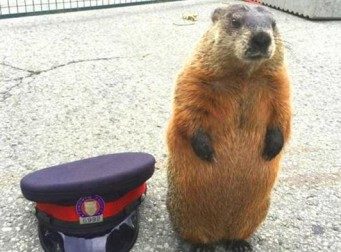 """""""차렷!"""" 꼿꼿한 자세로 경찰서를 찾아온 다람쥐"""
