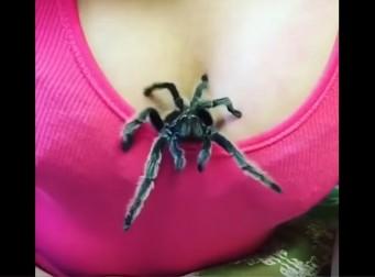 거대독거미가 가슴 속에서 스멀스멀~ (동영상)