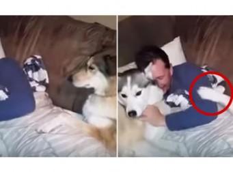 """""""주인님! 저만 봐주세요♥"""", 질투 많은 강아지(동영상)"""