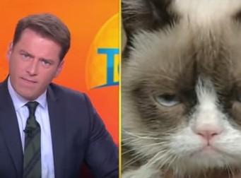 고양이를 데리고 인터뷰를 하면 발생할 수 있는 상황 (동영상)