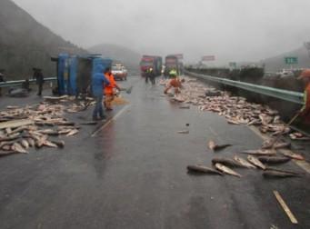 트럭 전복되니, 고속도로 전체가 '파닥파닥'(사진 5장)