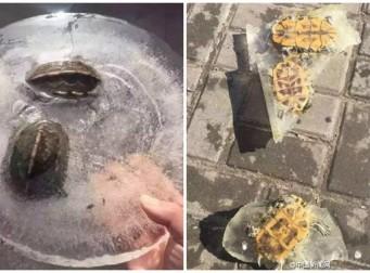 강추위에 얼어붙은 거북이…살릴 방법은?(사진 6장)