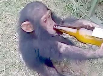 """""""쇠사슬에 묶고 맥주 마시게…"""" 끝없는 동물학대 (동영상)"""