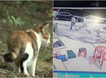 길걷다 임신한 고양이 발로 '뻥'…경찰 수사(동영상)