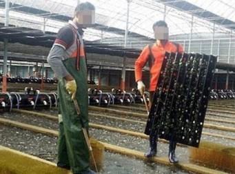 하루 12시간 노동에 월급 15만원 받는 '그들'의 눈물(사진5장)