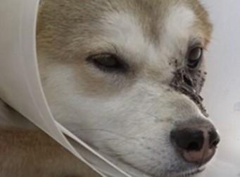 [감동 주의] 아픈 개가 주인을 멀리하는 이유(사진4장)