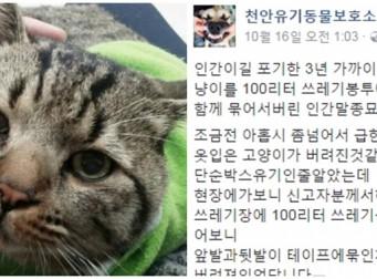 살아있는 고양이를 묶어 쓰레기봉투에 넣은 범인은 '최초 제보자', 도대체 왜?(사진6장)