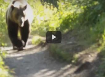 대형 곰이 나타나 나를 잡아 먹으려고 했다(동영상)