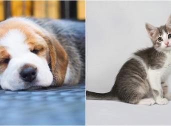애완동물 매매가 법적으로 금지된 나라