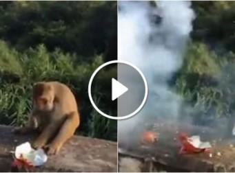 인간의 잔인한 장난으로 손가락 잃은 원숭이 (동영상)