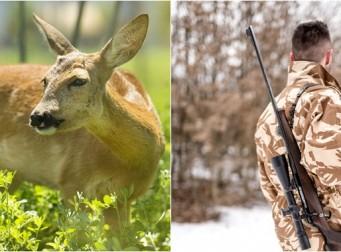 사냥꾼은 사슴 목에 달린 '이것'을 보고 차마 총을 쏘지 못했다..