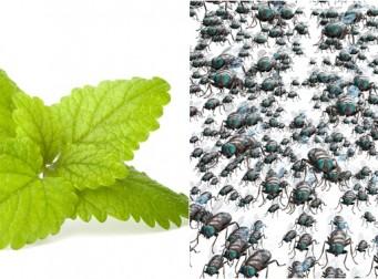 박하잎으로 쥐, 거미, 벼룩 등 각종 해충 제거하는 방법 3가지