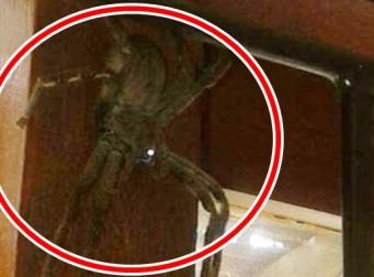 숙소에 나타난 거대한 거미