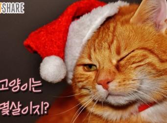 고양이 나이 계산법, 우리집 고양이는 몇살일까? (사진4장)