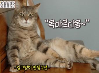 겨울철, 길 고양이에게 물 주는 방법 (사진 6장)