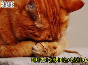 쟤는 뭘 저렇게 잘 먹었길래 뚱뚱해? 길고양이에 대한 오해
