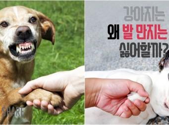 강아지는 왜 발 만지는 걸 싫어할까? (사진7장)