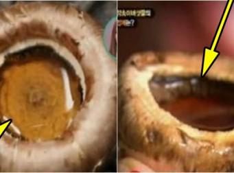 양송이버섯을 구울 때 생기는 '귀한 물'의 정체