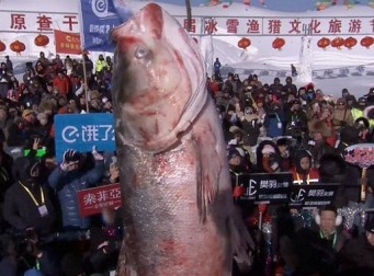"""""""가격만 1억 5천만원"""" 세계에서 가장 비싼 생선"""