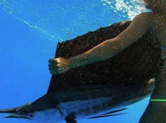 대형 물고기를 맨 손으로 잡아 사냥하는 여성