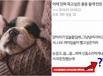 너무 외로워서 반려견과 '키스'했다는 극혐 후기
