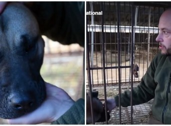개고기 농장에서 죽을 날만 기다리는 식용견(동영상)
