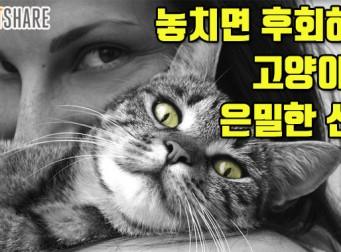 놓치면 후회하는 고양이의 은밀한 신호 (사진8장)