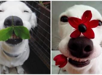 귀여움을 폭풍 발산하는 강아지의 모습(사진 6장)
