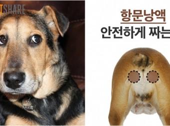 '똥꼬스키 원인', 강아지 '항문낭액' 안전하게 짜는 방법