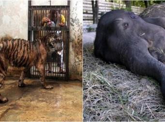 인도네시아에 있는 '죽음의 동물원' (사진 13장)