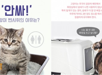 '안싸!' 고양이 변시위의 이유는? (사진6장)