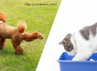 멍이 vs 냥이가 똥싼 후 발을 차는 서로 다른 이유 (사진6장)