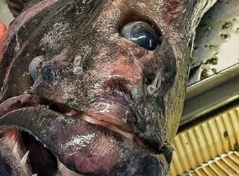 """""""제가 낚시를 하다 잡힌 물고기를 보고 토해버렸습니다"""""""