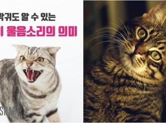 막귀도 알 수 있는 고양이 울음소리의 의미 (사진11장)