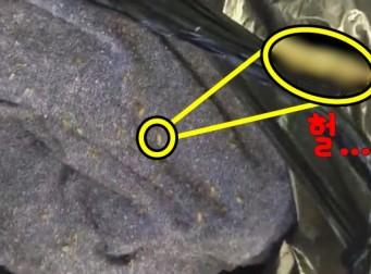 열차에 실려있던 짐에서 꿈틀거리던 의문의 생명체들 (동영상)