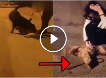 대형견이 소형견 물어뜯어 죽인 뒤 배째라는 주인 vs 통곡하는 주인 (동영상)