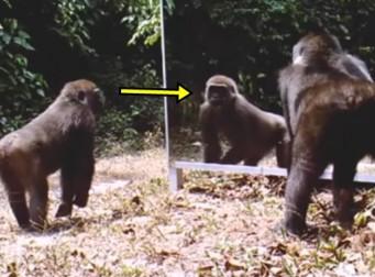 거울에 비친 자신의 모습을 본 동물들의 반응 (동영상)