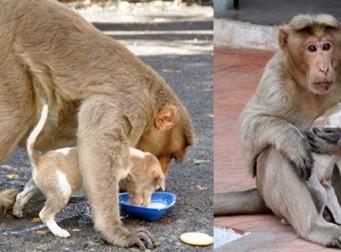 모성애의 위대함을 보여주는 원숭이와 강아지 (사진 9장)