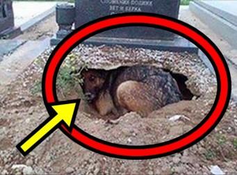 처음에는 이 강아지가 무덤에 묻힌 주인과 함께하려고 하는 줄 알았다, 하지만… (사진 6장)