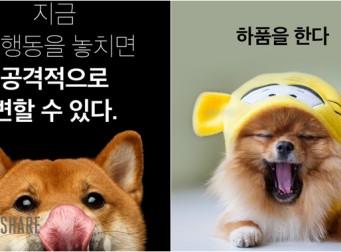 강아지가 스트레스 받을 때 하는 행동 (사진 15장)