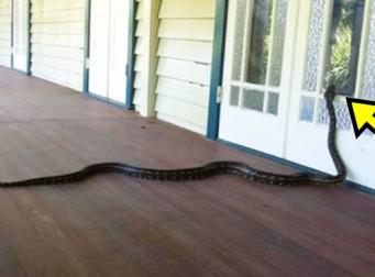 호주 가정집에서 흔히 볼 수 있는 광경
