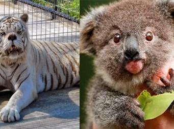동물도 다운증후군에 걸린다, 하지만… (사진14장)