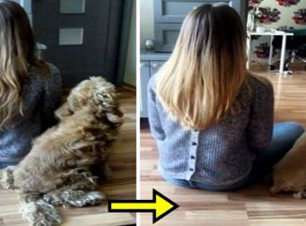 강아지가 미용실을 다녀오기 전후 비교사진 (사진14장)
